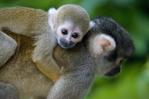 4fb107af-505d89121b62376f Top 30 Cutest Animals