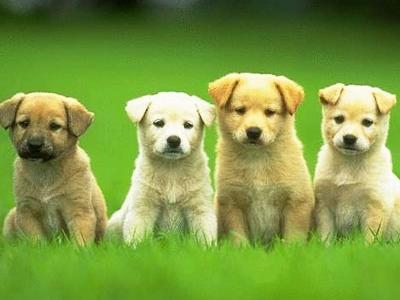 697 Top 30 Cutest Animals