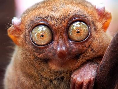 82 Top 15 Ugliest Animals