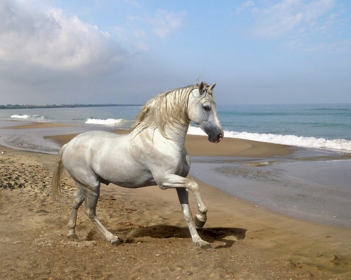 Beautiful-Animal-15-most-beautiful-horse-photos-12 Top 20 Most Beautiful Horses In The World