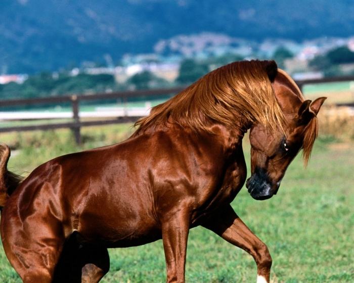 Beautiful-Animal-15-most-beautiful-horse-photos-8 Top 20 Most Beautiful Horses In The World