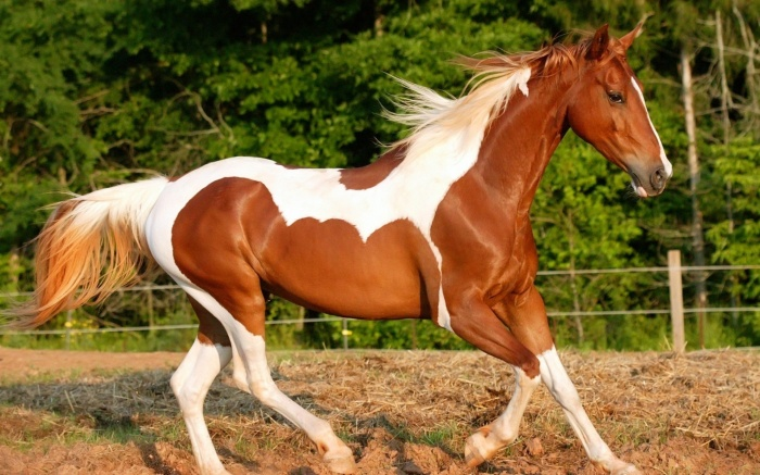 Beautiful-Horse Top 20 Most Beautiful Horses In The World