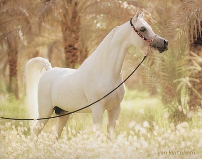 Beautiful-horse-in-the-world Top 20 Most Beautiful Horses In The World