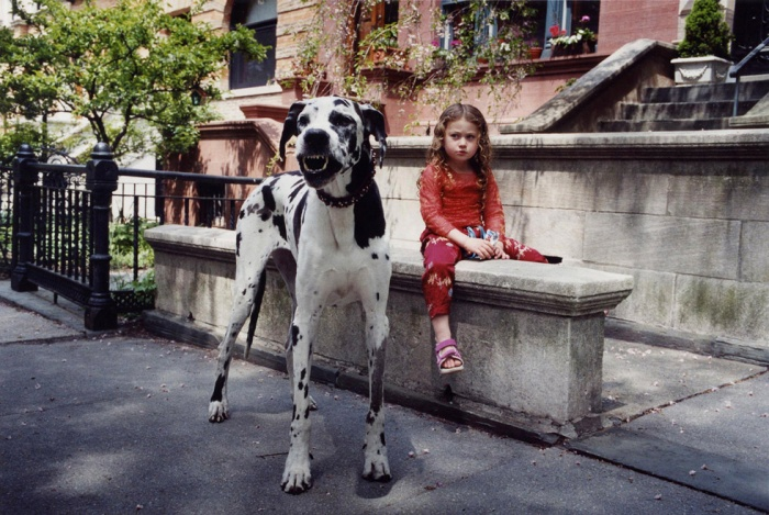 GreatDane_RobinSchwartz The Great Dane Dog Is A Well-mannered Family Companion