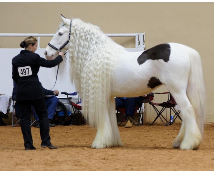 Horse1 Top 20 Most Beautiful Horses In The World