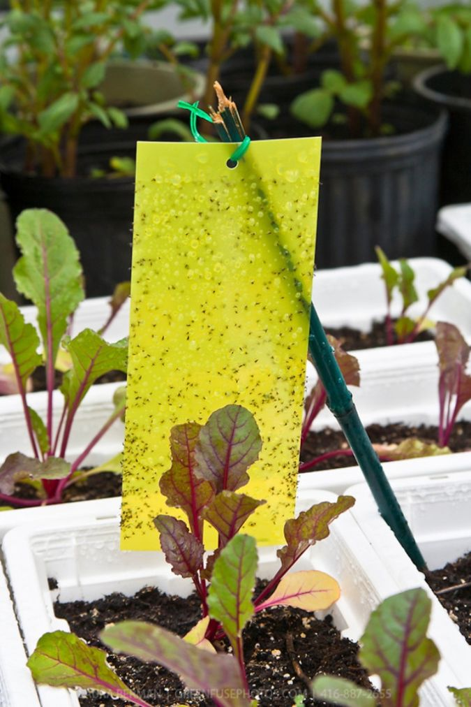Insect-trap How to Fight Pests Using Organic Pest Control