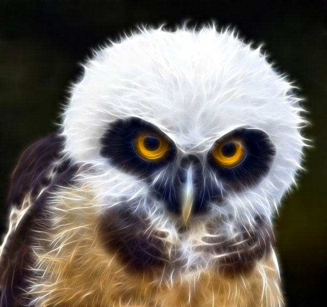 Juvenile-Spectacled-Owl Top 15 Ugliest Animals