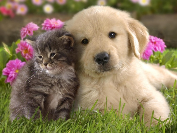 Kittens-and-puppies-new-photos-funny-and-cute-animals Top 30 Cutest Animals