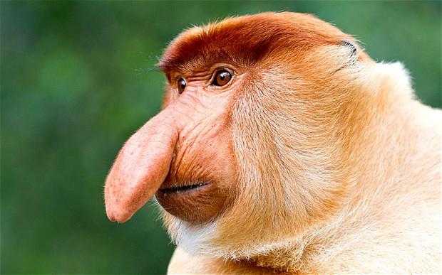 MONKEY_2585151b Top 15 Ugliest Animals