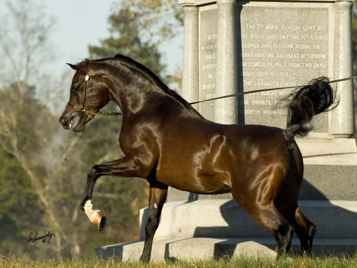 The-Singleton-11.11.10-DSC_0282 Top 20 Most Beautiful Horses In The World