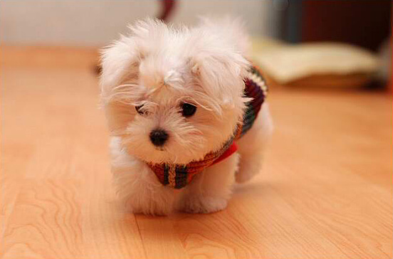 The_Cutest_Baby_Animals-_36 Top 30 Cutest Animals