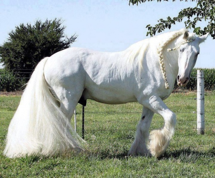 Very-Beautiful-Horse-Picture70114837_201311104630 Top 20 Most Beautiful Horses In The World