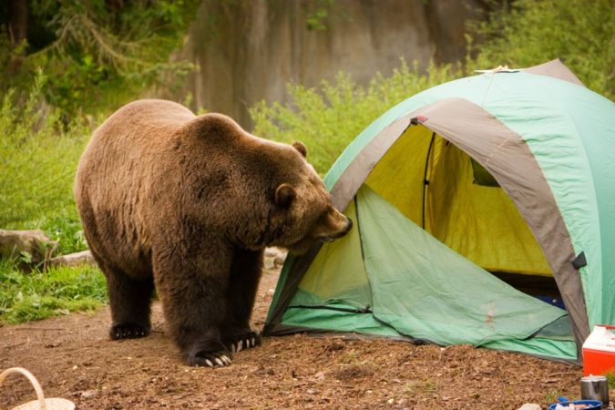 animals What Is the Importance of Survival Courses?