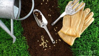 Photo of How to Fight Pests Using Organic Pest Control