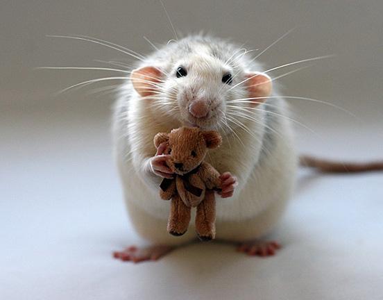 baby01 Top 30 Cutest Animals