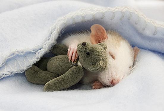 baby17 Top 30 Cutest Animals