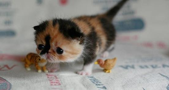 baby27 Top 30 Cutest Animals
