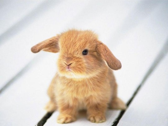 babyrabbit_2 Top 30 Cutest Animals