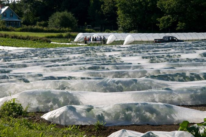 barrier How to Fight Pests Using Organic Pest Control