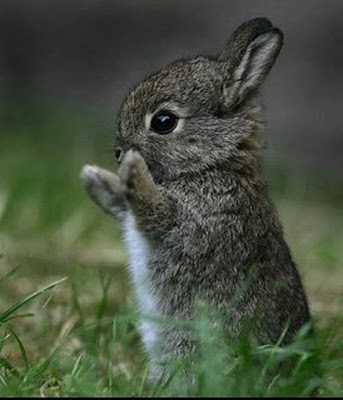 calpping-rabbit Top 30 Cutest Animals