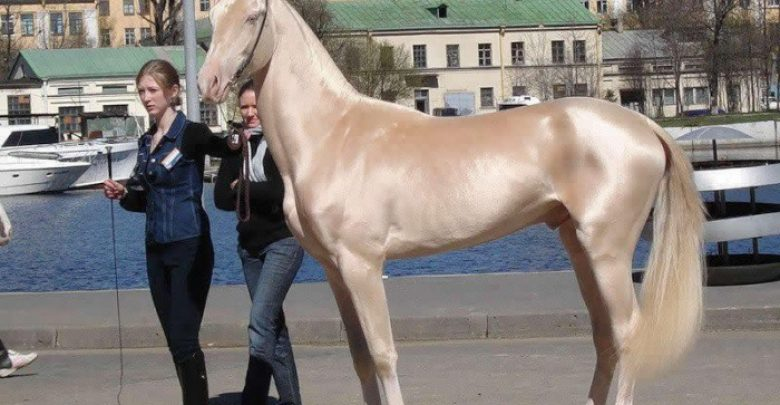 Photo of Top 20 Most Beautiful Horses In The World