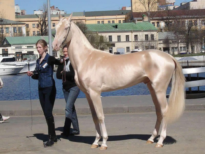 cm-42546-050e4ee806d048 Top 20 Most Beautiful Horses In The World