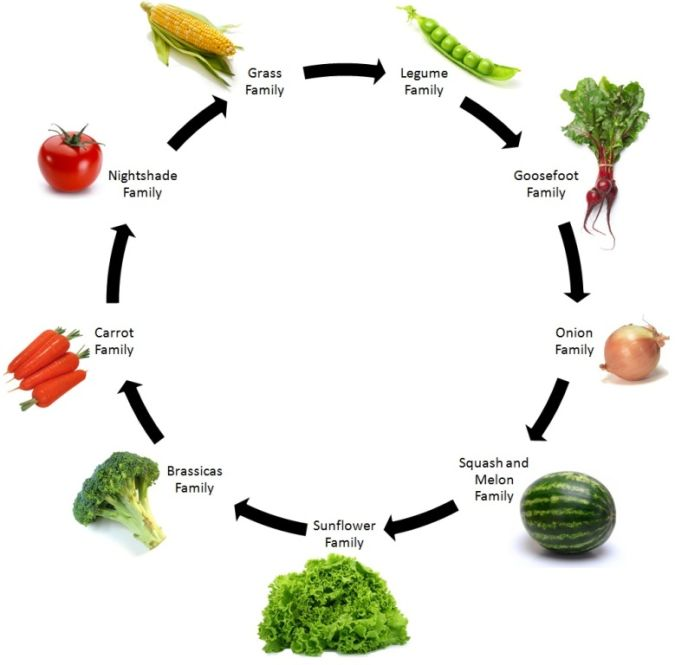 crop-rotation How to Fight Pests Using Organic Pest Control
