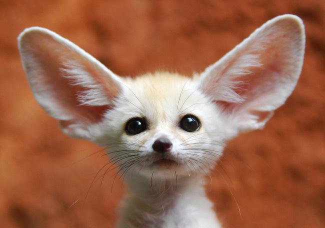 cute-animals-5-animals-9403312-650-456 Top 30 Cutest Animals