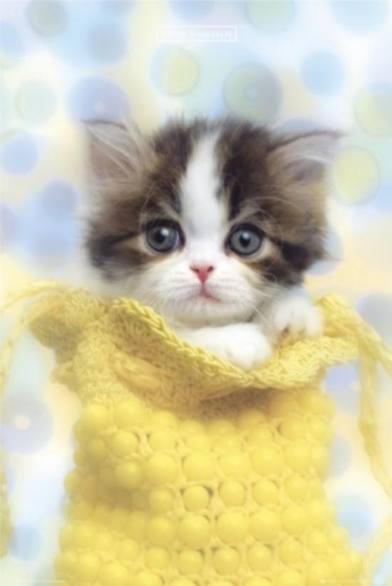 cute-cats-02 Top 30 Cutest Animals