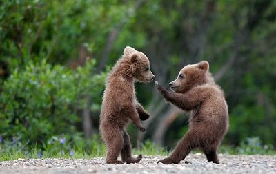 cute_bear_fight Top 30 Cutest Animals