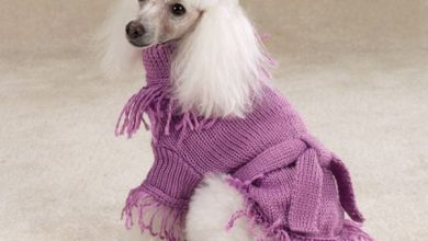 Photo of Surely Your Animal Will Look Beautiful In Clothes
