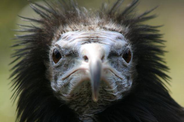 eca86ba0526e119bd7244e Top 15 Ugliest Animals