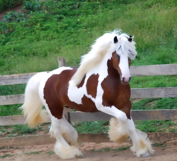 fcXN5 Top 20 Most Beautiful Horses In The World