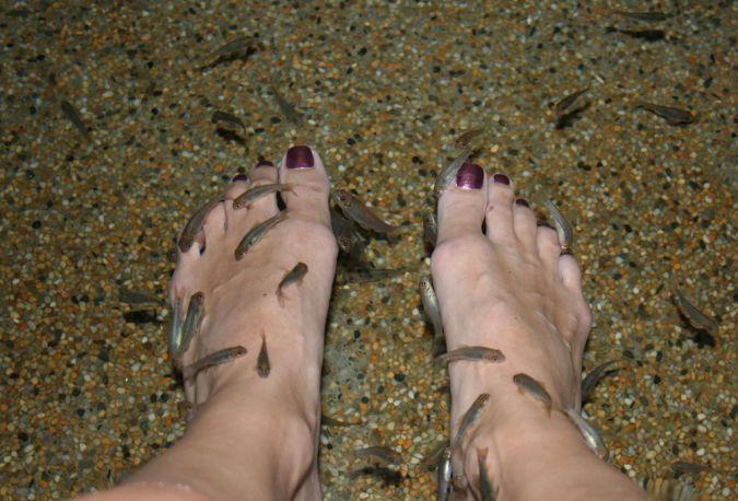 fish-feet Treat Your Skin Using Garra Rufa Fish