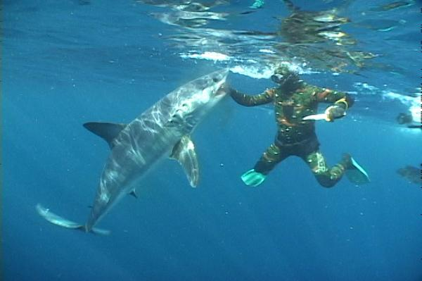 l Why Mako Sharks The Fastest Among Other Sharks?