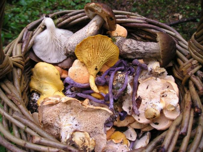 mashroom What Is the Importance of Survival Courses?