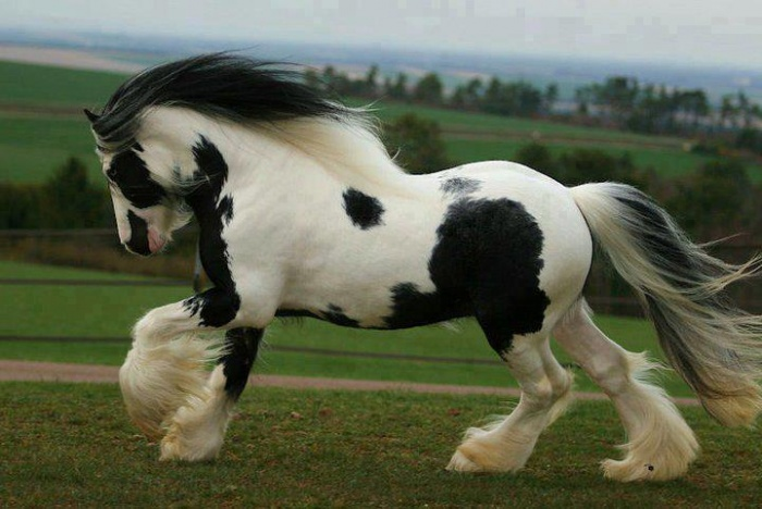 most-beautiful-horse-in-world Top 20 Most Beautiful Horses In The World