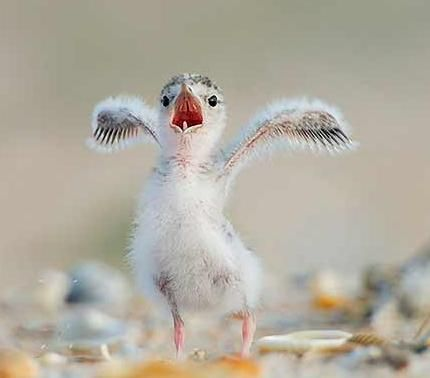top-10-cutest-animals-threatened-by-bp-oil-spill Top 30 Cutest Animals