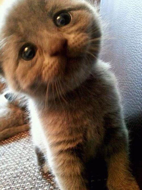 tumblr_m9as07L4eK1qen8a1o1_500 Top 30 Cutest Animals