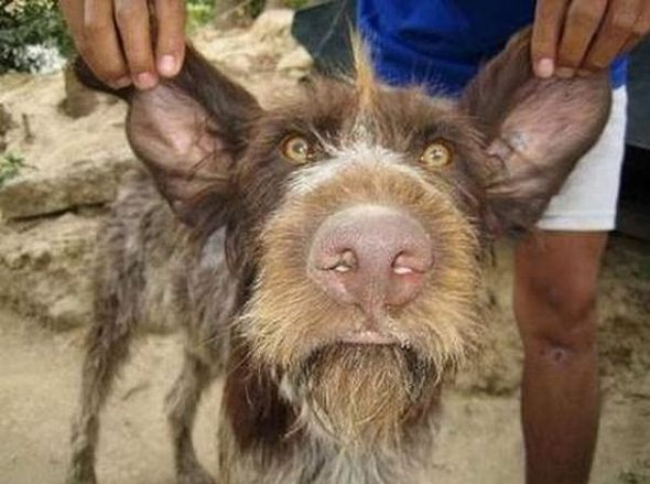 ugliest-dog-in-the-world-10 Top 15 Ugliest Animals