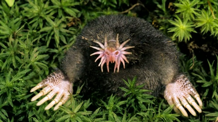 wyLcpFdh Top 15 Ugliest Animals