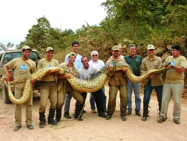 083 Be Ready To See Top 16 Largest Animals In The World