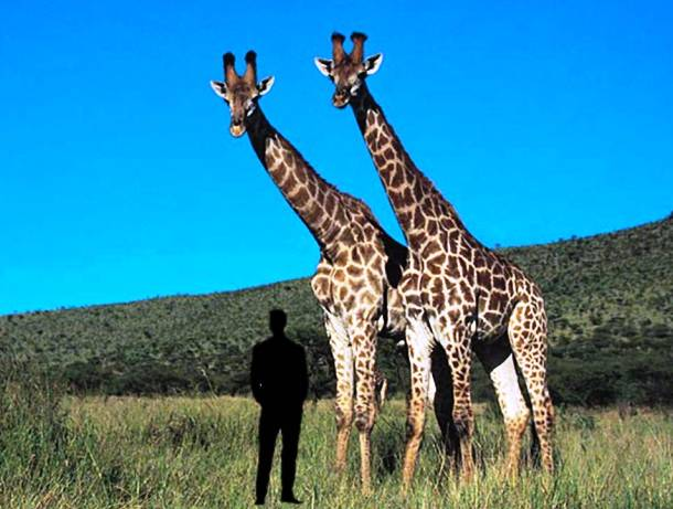 153 Be Ready To See Top 16 Largest Animals In The World