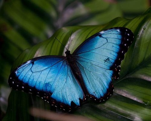 4238637031_16d6ba884d Top 24 Unique Colorful Creatures Around The World