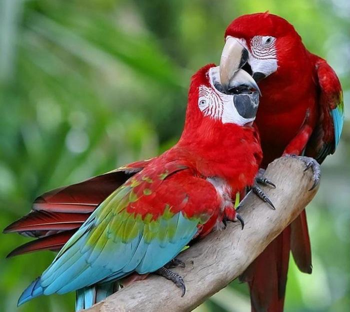 58899847 Top 24 Unique Colorful Creatures Around The World