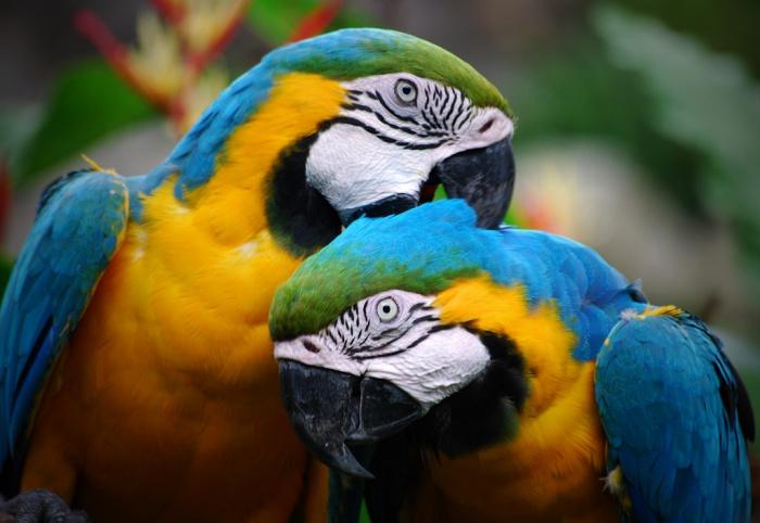 625286077_1369928845 Top 24 Unique Colorful Creatures Around The World