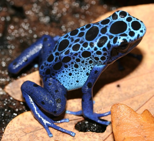 9 Top 24 Unique Colorful Creatures Around The World