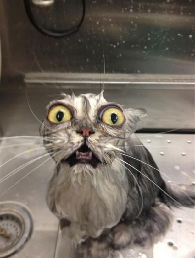 Asta-i-factura-mea Top 24 Funny And Laughable Animals