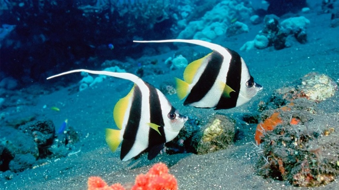 Beautiful-Sea-Fish-11 Top 24 Unique Colorful Creatures Around The World