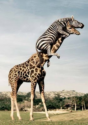 Fun-Pictures-8 Top 24 Funny And Laughable Animals